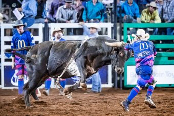 Safety in the ring: Bullfighting at rodeos